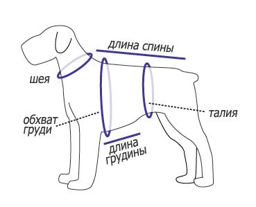 измерение размеров собаки для одежды